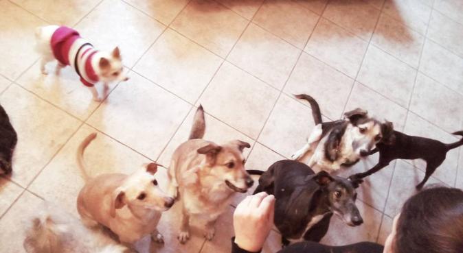 Anche il vostro cane merita una vacanza!, dog sitter a Zanica