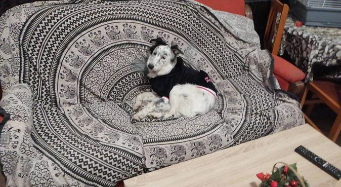 Deja a tu perro como en casa., canguro en Sant Vicenç dels Horts, España