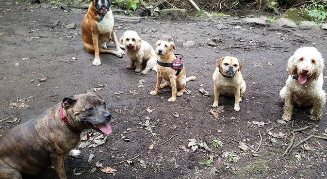 South Sheffield's best dog walker & pet service!, dog sitter in Sheffield