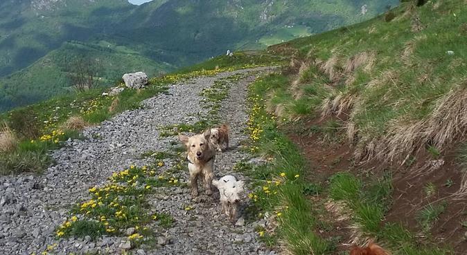 Coccole e passeggiate in mezzo alla natura., dog sitter a Strozza, BG, Italia