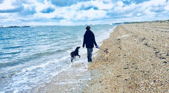 Cosy stay and beach walks for your dog in Warsash, dog sitter in Southampton