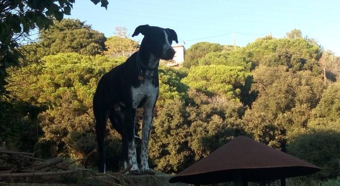 Cuidado familiar, juego y paseos por la montaña, canguro en Teia