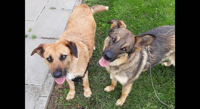 Paseadora y cuidadora de perros en Valencia, canguro en Alacuás