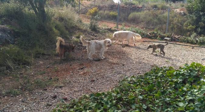 Cariños, campo y diversión ¡Estará genial! :), canguro en Valencia