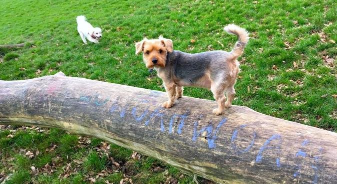 Experienced Dog Carer Available, dog sitter in Sidcup