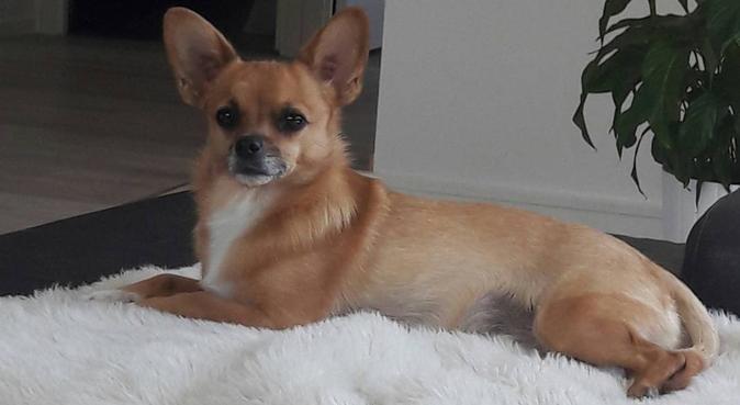 Fyrbent arbetskollega sökes i Ösmo, hundvakt nära Ösmo