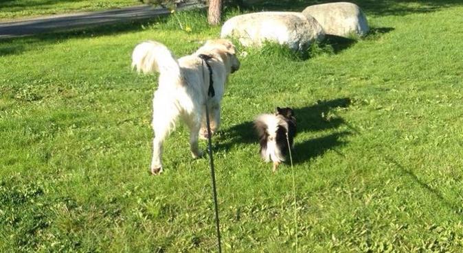 Utforsking av Leinstrand!, hundepassere i LEINSTRAND