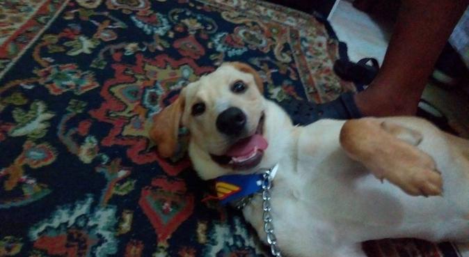 Mejor amigo de perros, PASSEADOR en Castelldefels, canguro en Barcelona, España