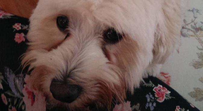 Liebevolle Hundesitterin aus Berlin-Pankow, Hundesitter in Berlin