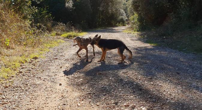 Experiencias perrunas, canguro en Matadepera, España