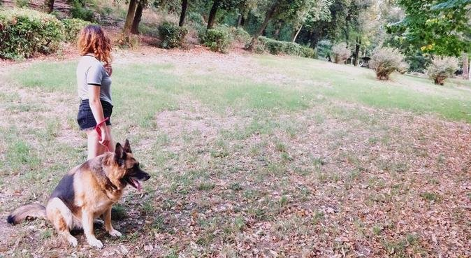 Giochi e passeggiate in una zona verde di Firenze, dog sitter a Florence