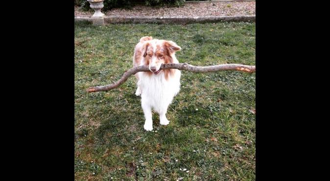 Douceur, tendresse, jeux et dogsitting, dog sitter à Pessac