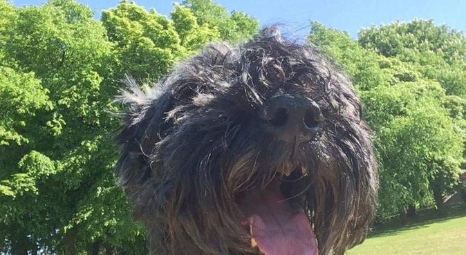 Dog walking, sitting and company!, dog sitter in Manchester