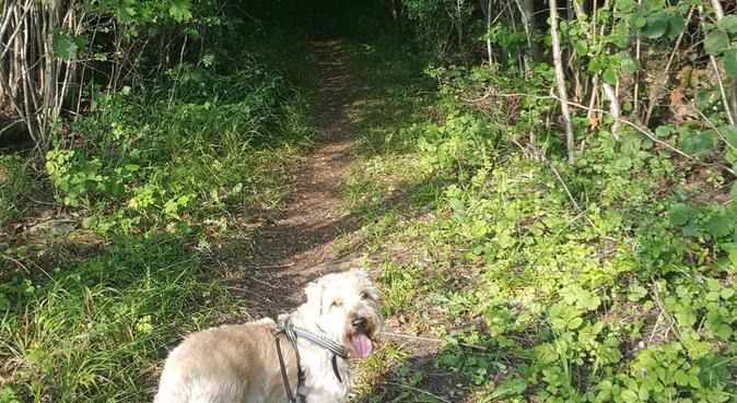 Dagspassning i Hallonbergen, hundvakt nära Sundbyberg