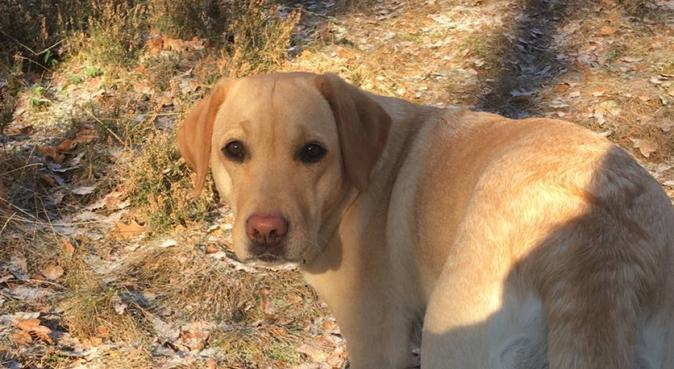 Flexibel och engagerad hundpassare finnes!, hundvakt nära norrtälje