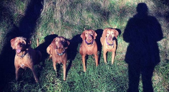 Dog whisperer in Newton, dog sitter in Chester