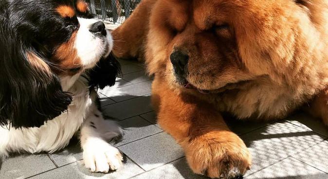 Lunghe passeggiate con i vostri adorati cagnolini, dog sitter a Parma