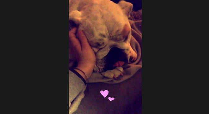 Amour et câlins, dog sitter à Bordeaux, France