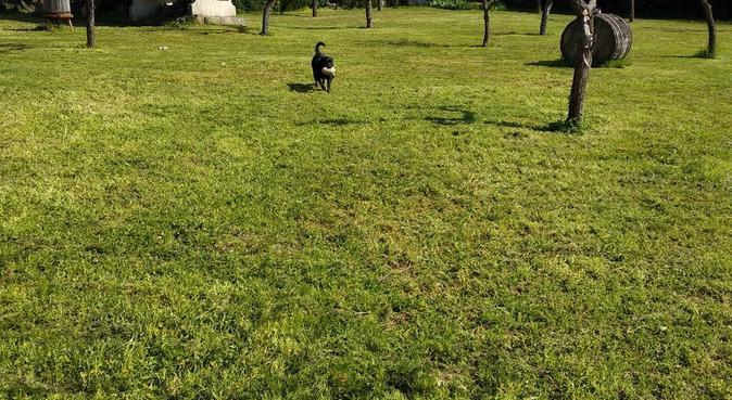 Parque temático perruno, canguro en Ourense