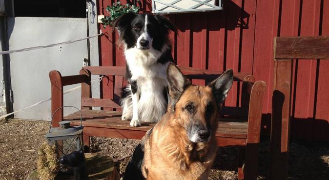 Hundrastning i växjöområdet, hundvakt nära Växjö