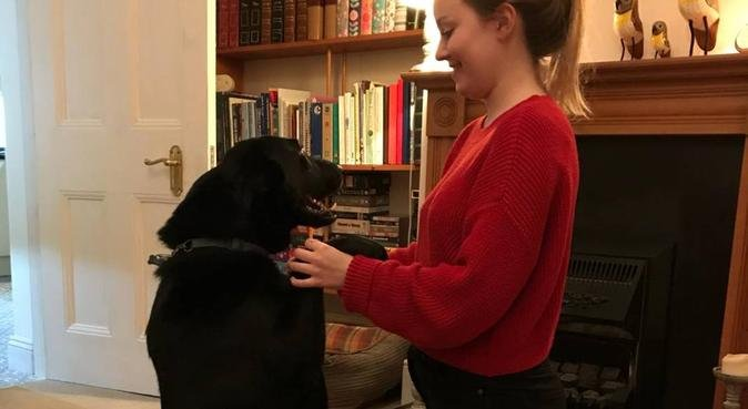 Trustworthy dog lover in London, dog sitter in London