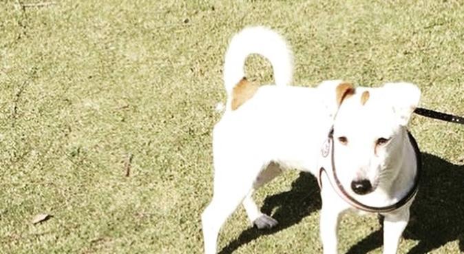 Coccole, passeggiate e assistenza per pets, dog sitter a Cagliari