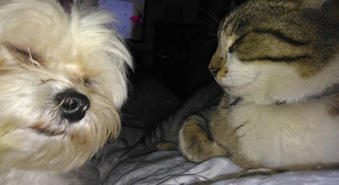 La nounou Chacha pour le bonheur de vos animaux, dog sitter à Montigny-lès-Metz