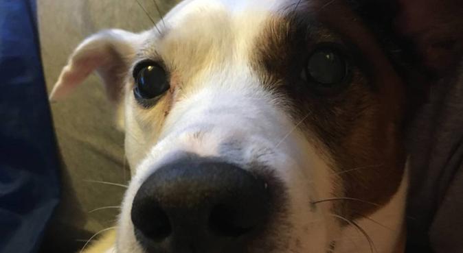 Amour et câlins à gogo 🥰, dog sitter à Saint-Jacques-de-la-Lande, France
