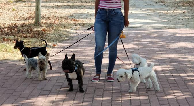 Entre amigos pasear es más divertido, canguro en Madrid, España