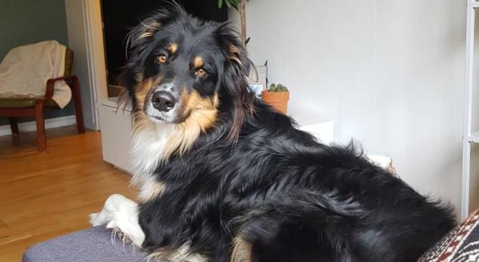 Låt mig och Snobben sällskapa din hund, hundvakt nära Norrtälje