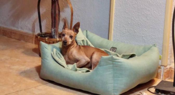 Paraíso animal super familiar, dog sitter in Algeciras