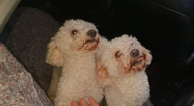 Dog paradise and Walker in Brighton, dog sitter in Brighton