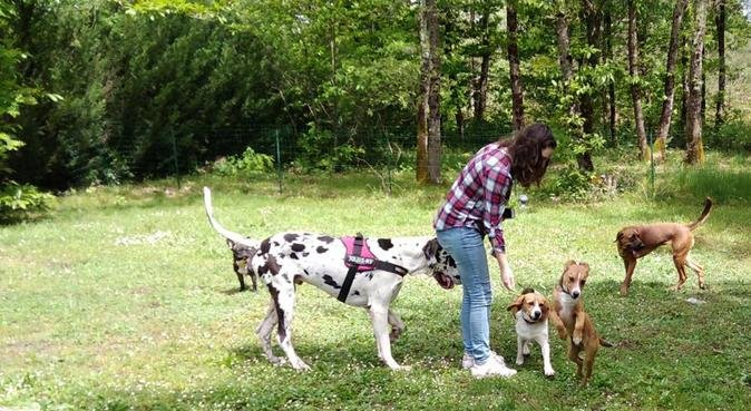 GAYA ANIMALIA - pension familiale professionnelle, dog sitter à Bordeaux