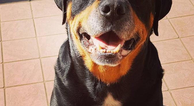 Tante coccole, divertimento e lunghe passegiate., dog sitter a Torino