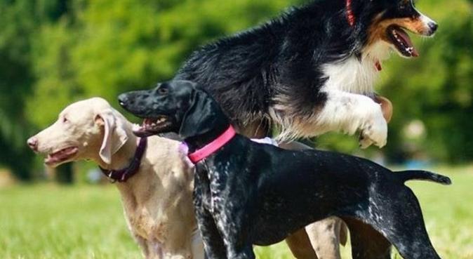 Un havre de câlins pour les toutous azuréens, dog sitter à Nice