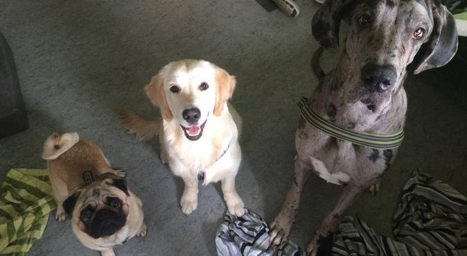 Aktiv hunpassning i hem miljö😊, hundvakt nära Lund