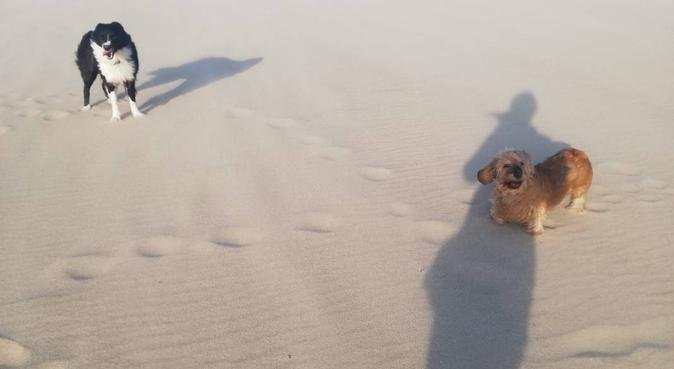 Liefdevolle hondenoppas, uitlaatservice, hondenoppas in Oudkarspel