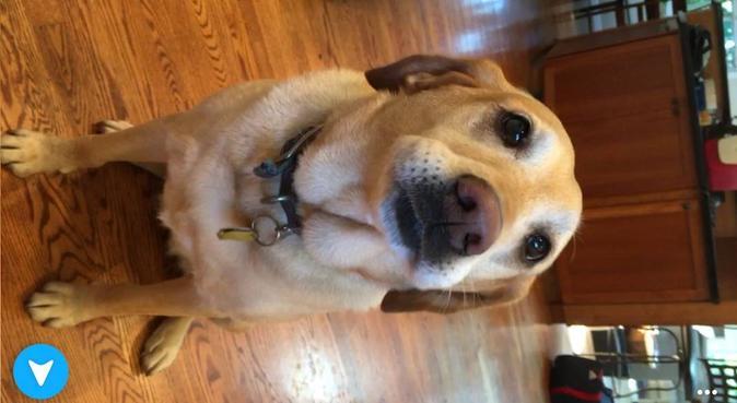 Passeggiate, giochi e coccole all'aria aperta 🐶!, dog sitter a Brescia