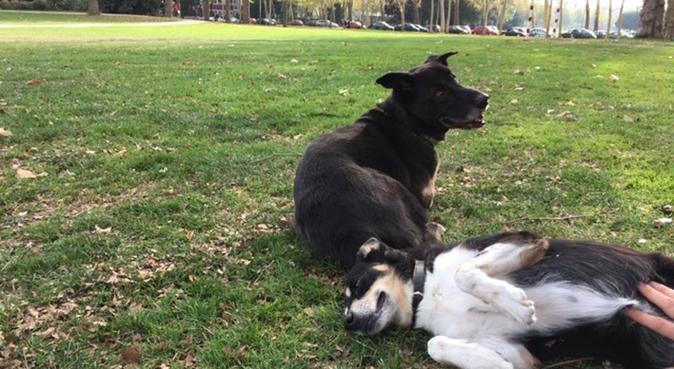 Doggy sitting in Cologne, Hundesitter in Koln