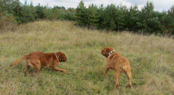 Sophie's Dog Walking & Pet Sitting, dog sitter in Aberdeen