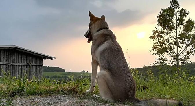Divertimento, Passeggiate e Compagnia, dog sitter a Verona, VR, Italia