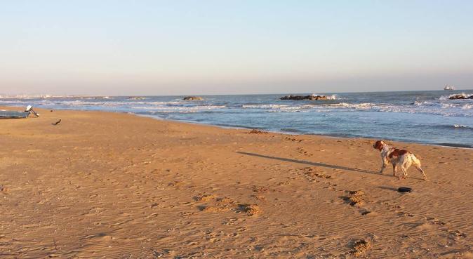 Tanto divertimento, coccole e passeggiate insieme!, dog sitter a francavilla al mare