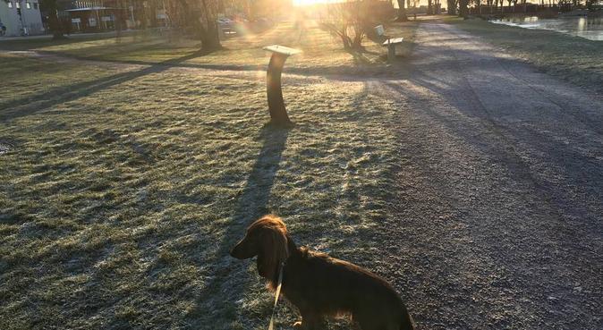 Omsorgsfull och trevlig hundpassning i Kalmar, hundvakt nära Kalmar, Sverige