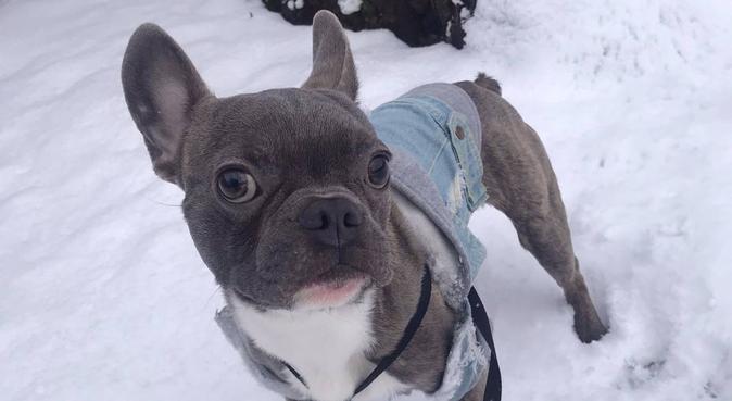 Jacob's Walks in Brighton & Hove, dog sitter in Brighton, UK