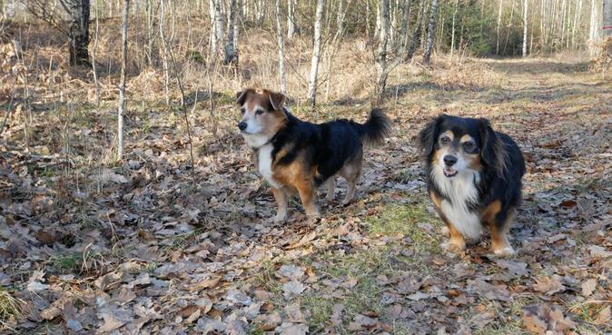 Hundälskare som söker promenadkompis., hundvakt nära Växjö