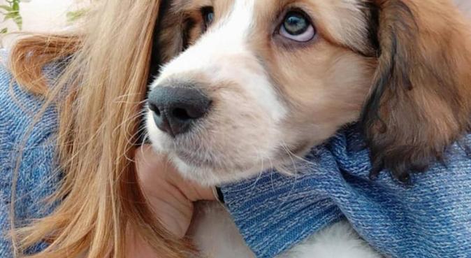 La compagna perfetta di passeggiata del tuo cane, dog sitter a Bérgamo, Italia
