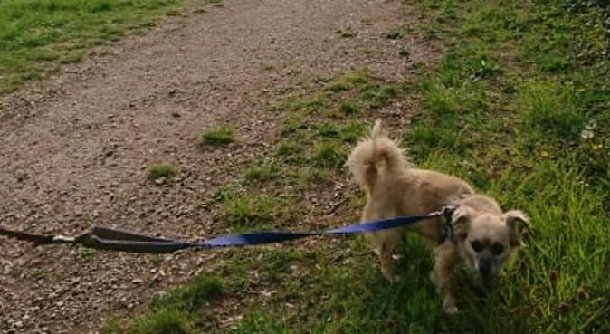 Les promenades heureuses, dog sitter à Cergy