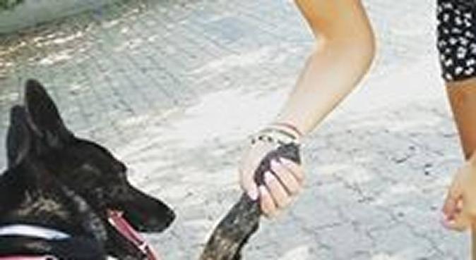 Tante coccole e passeggiate all'aria aperta!, dog sitter a Quartu Sant'Elena