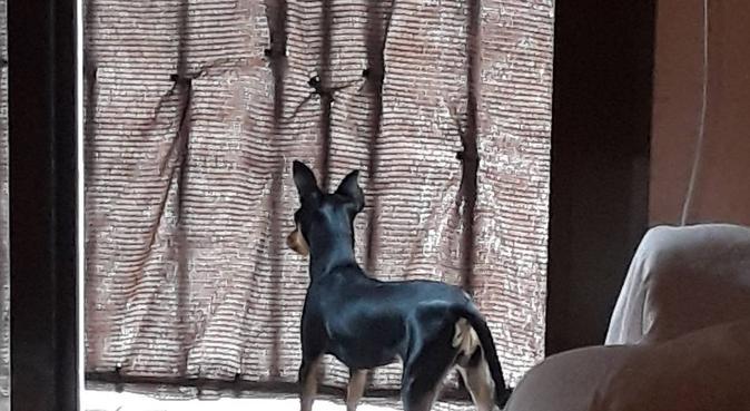 Tu perro estara cuidado como si fuera mio, canguro en Mataró