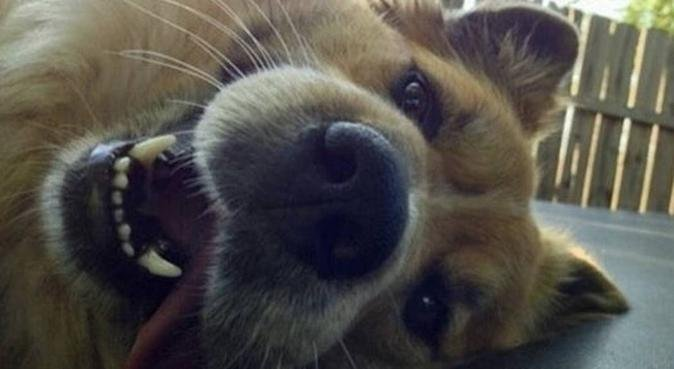 Lunghe passeggiate e divertimento assicurato! 🐾, dog sitter a Padova
